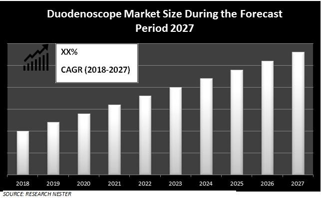 duodenoscope market