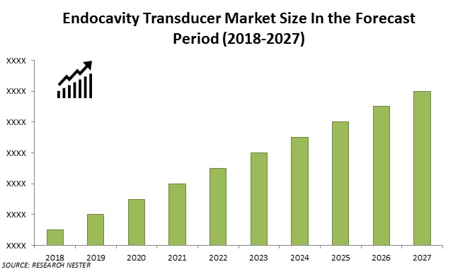 endocavity transducer market size