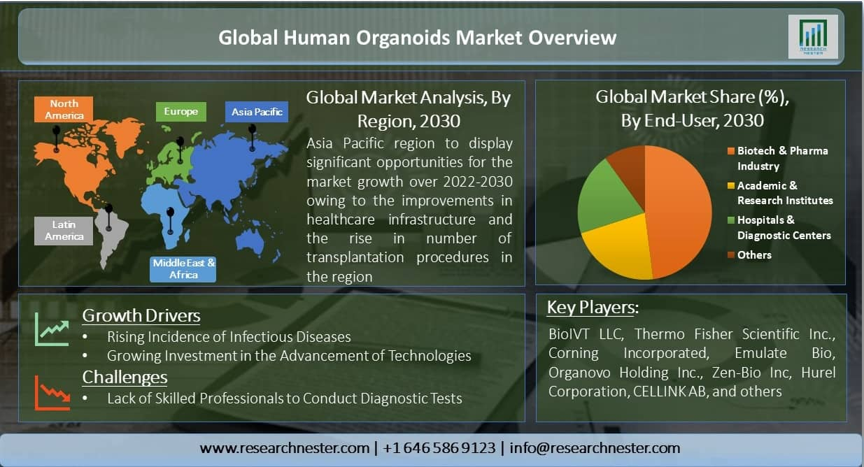 Global-Human-Organoids-Market-Overview