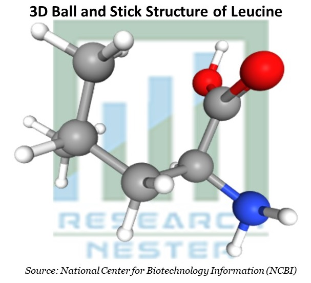 3D Ball and Stick Structure of Leucine